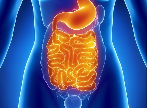 intestino_limpieza_colon.jpg