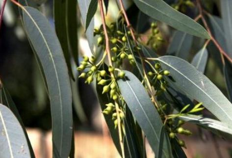 Plantas medicinales medicina intercultural for Plantas ornamentales mas comunes